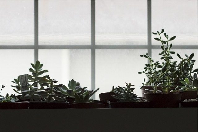What Herbs Can You Grow Indoors from Appliance City